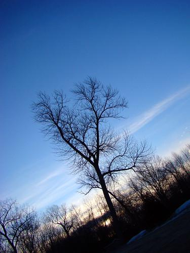 winter tree sunrise bluesky greenbay thebay uwgb lambeaucottage