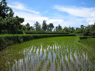 Balinese rice terraces   by sbmalev