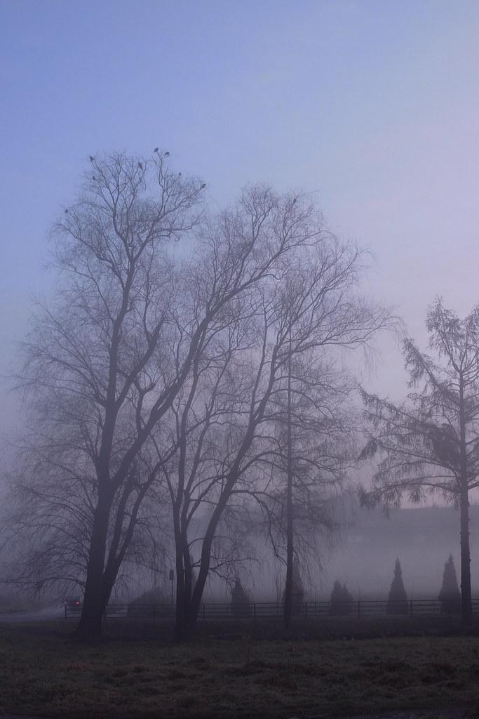 Przydrożne drzewa / Roadside trees