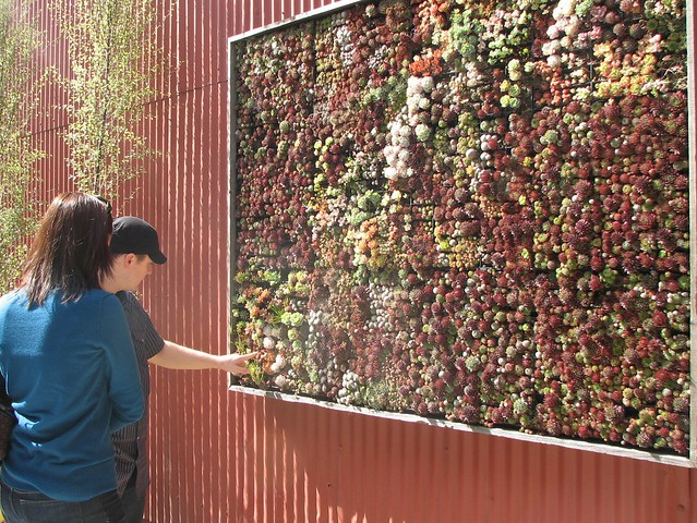 a living 'wall'