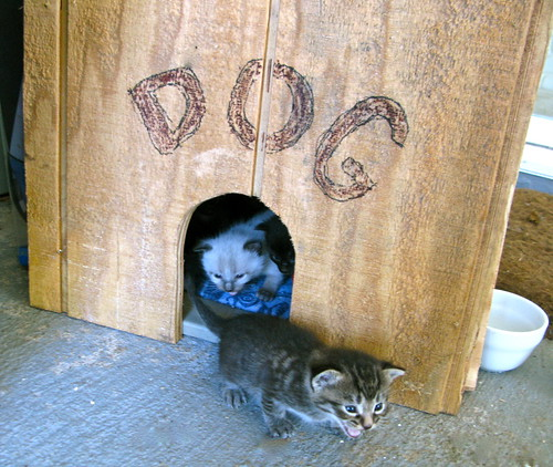 In the Dog House   by jurvetson