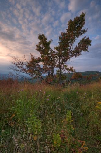 autumn tree colors virginia nationalpark dusk va wildflowers shenandoah skylinedrive