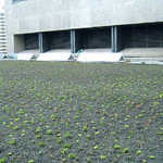 SunTrust Green Roof