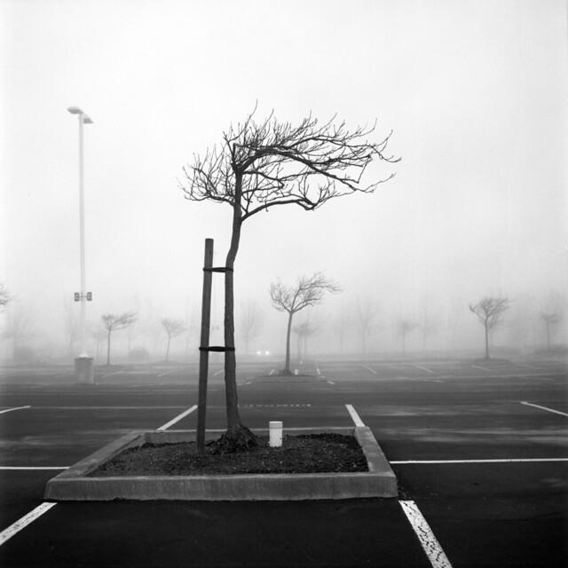 misty lot