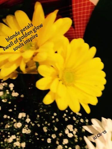 july 9 yellow daisies