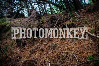 somos una empresa de fotografía Profesional. Photomonkey