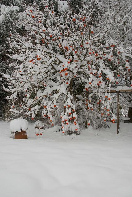 2009-12-19-Nevicata