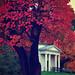 Vintage Leaves by Am.Cross