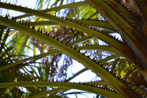 (13) Le Parc du Mugel et son jardin exotique - La Ciotat 32302254094_4edc1a2da9