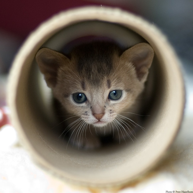 In a Tube | A small paper tube is fun to explorate  They are