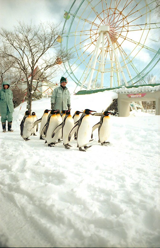 ペンギンのおさんぽ by Noël Café