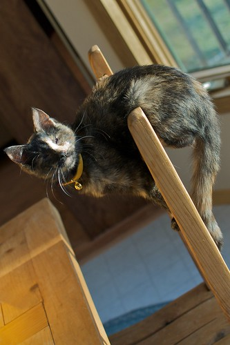 Helen the Acrobatic Kitten | by pmarkham