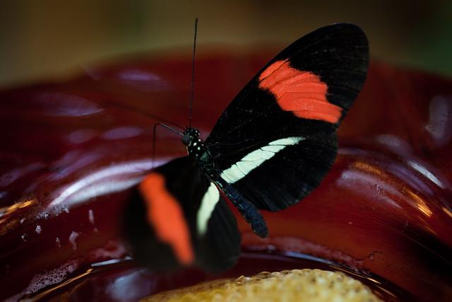 Butterfly Palace 5883