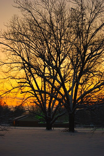 snow sunrise arkansas pecan