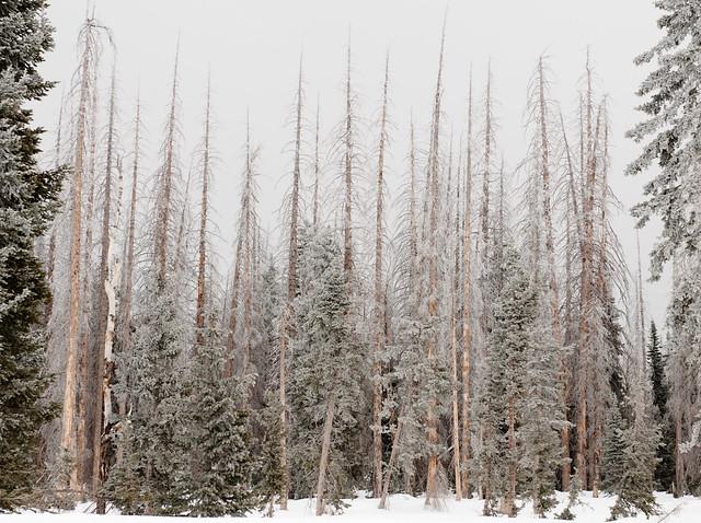 Frozen Firs, Utah