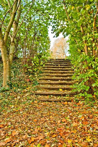autumn fall nikon steps warwickshire vr d60 alcester 1685mm landscapesshotinportraitformat