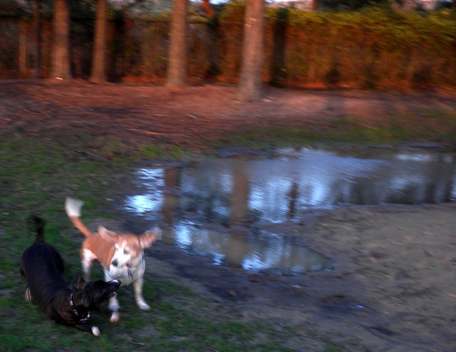 Rosie and Cooper, with puddle