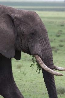 Tanzania_0049   by Rob Minson