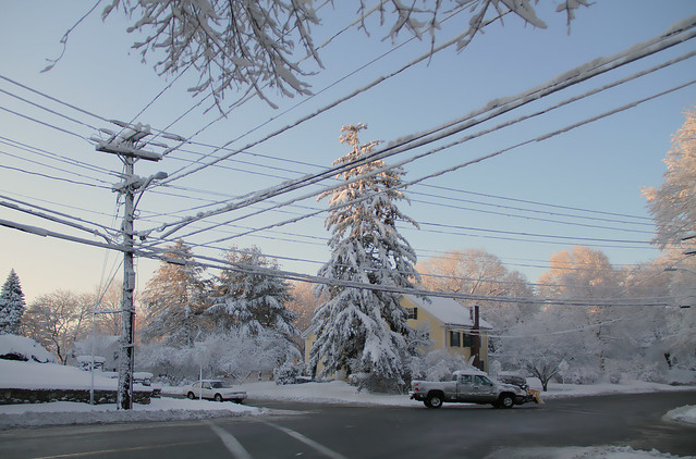 snow-covered power lines and trees, morning; at Prospect and Chestnut, Wakefield, MA (2010)