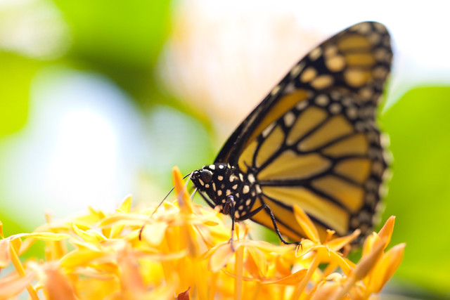 Butterfly Palace 5829