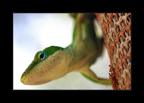 searchthebest bej specanimal golddragon overtheexcellence natureselegantshots qualitypixels vosplusbellesphotos
