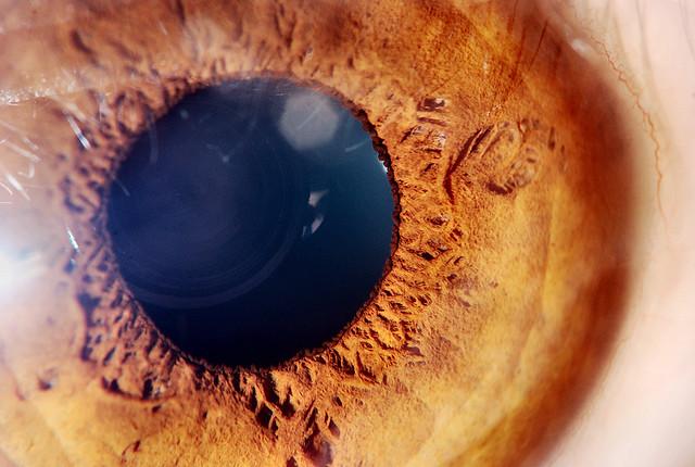 Human Eye - Extreme Macro
