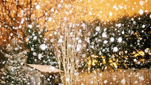 washington dc snow storm begins | by woodleywonderworks