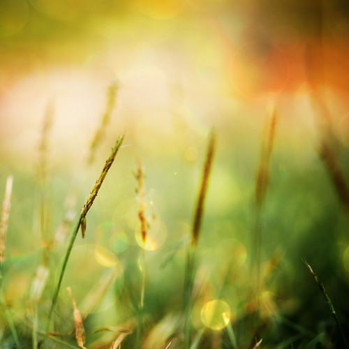 texture grass nikon dof bokeh depthoffield updiliman 105mm universityofthephilippines nikkor105mmf28 nikkor105 d700 artistpicks jendarling1010 sheilaparas gettyimagesphilippinesq1
