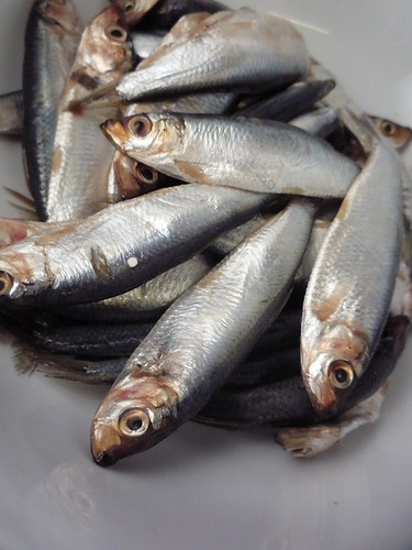 Sprats | by Girl Interrupted Eating