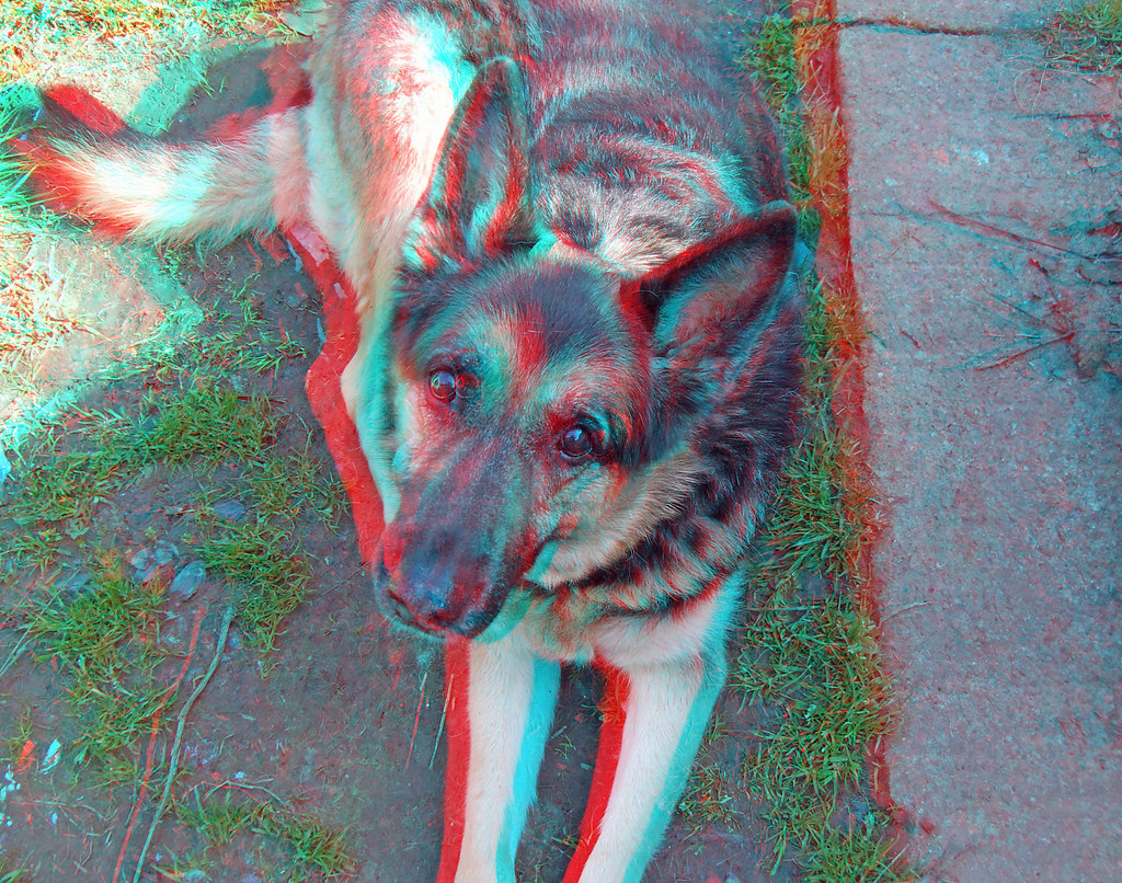German Shepherd Dog Alsation In Anaglyph 3d Stereo Red