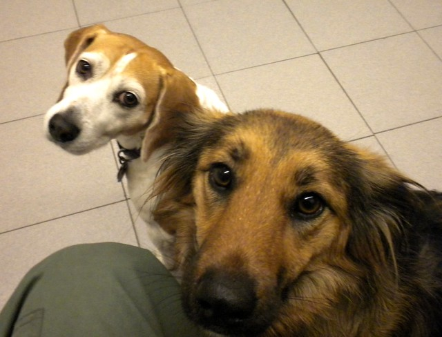 at the vet's