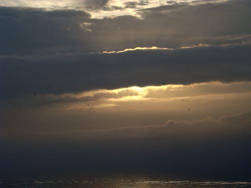 morning pink sky orange seagulls mist portugal yellow tangerine clouds sunrise geotagged gaivotas seagull sony peach lagoon nuvens ripples ria darkclouds gaivota aveiro riadeaveiro sonydsch9 geo:lat=40719168 ilustrarportugal ubichan geo:lon=8698608