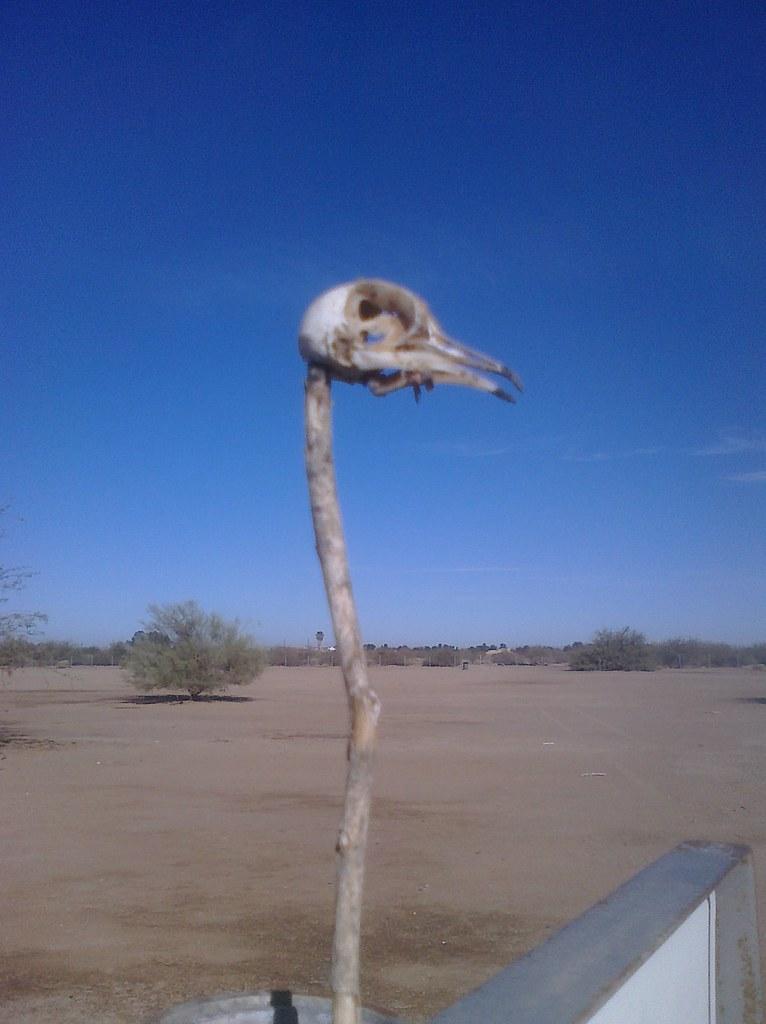 Bird Skull of Disc Golf Doom