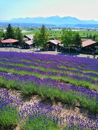 flowers hokkaido lavender 北海道 furano ラベンダー 富良野 ファーム富田 xperia xperiaz3