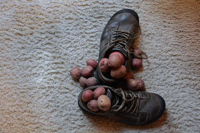 I Am So Tired of Waking Up Each Morning Only to Find My Shoes Filled With Potatos
