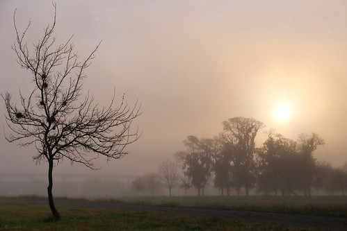 janbuchholtz tree fog sunrise bayou houston texas sun mysterious dawn braysbayou