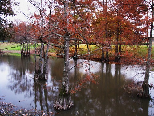 park travel autumn trees usa reflection green nature water creek canon mississippi leland landscapes scenery view state south peaceful powershot daytime cypresses tranquil baldcypress roadsidepark sx10is waltphotos