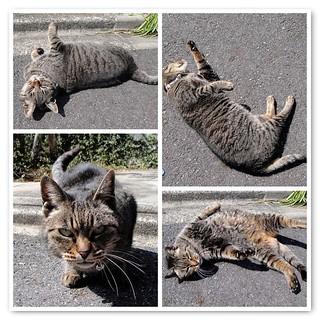 a dancing cat :D