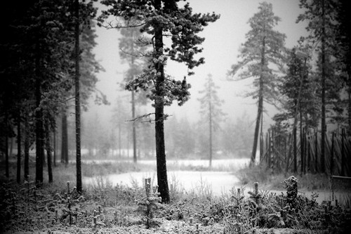 Lapland forest | by pallotron