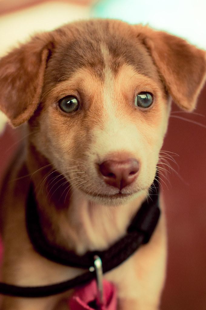 Puppy Dog by christian.senger