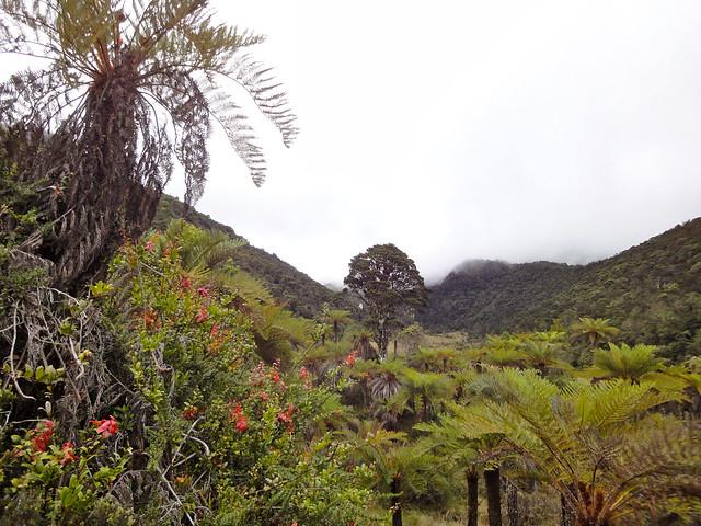 Highlands around Mount Wilhelm
