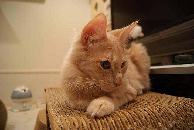 2009-12-25 CurlUpCafe