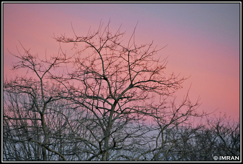 pink trees sunset sky stilllife nature clouds outdoors landscapes suffolk nikon seasons dusk framed peaceful tranquility longisland 2009 imran d300 patchogue imrananwar kartpostal bej eastpatchogue abigfave