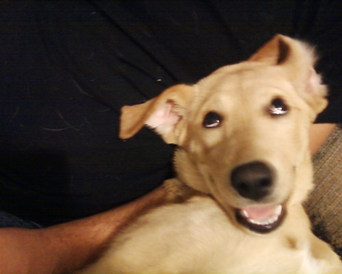 Freaky eyed dog