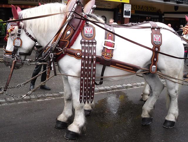 Brauerei-Pferd auf dem Cannstatter Volksfest