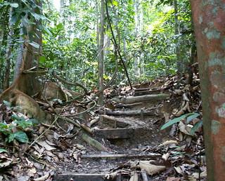 Dschungel direkt vor Kuala Lumpur´s Haustür