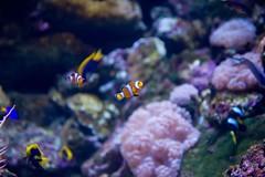 great barrier reef (4 von 19)
