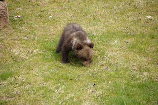 bear   by twicepix