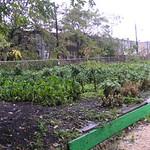 Duncan Street Crops