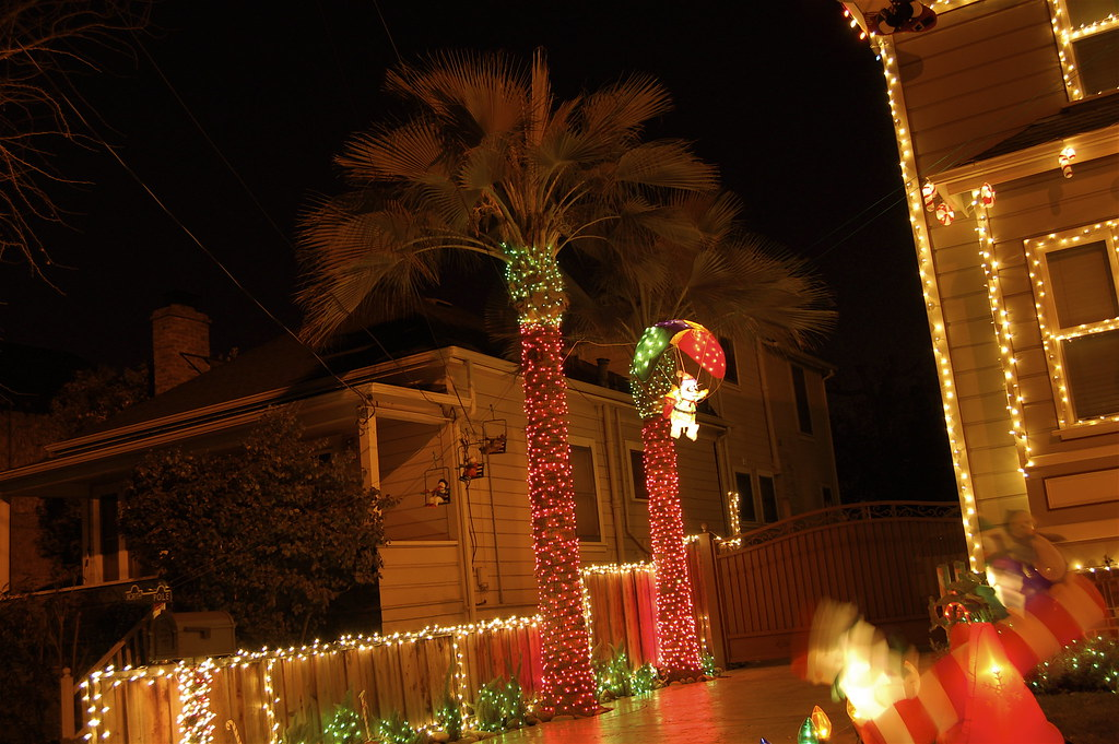 Christmas Lights In Palm Trees.Christmas Lights Palm Trees Rich Flickr